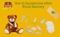 How do cannabinoids affect wound recovery