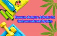 Exercise activity affects the Endo cannabinoid system, Exercise Activity Affects the Endocannabinoid System. Endocannabinoid system is active during exercise, physical exercise increases endocannabinoid levels