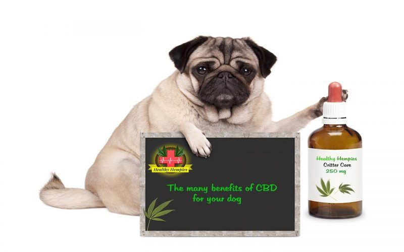 dog healthy hempies Benefits of CBD Oil for Dogs Relieves chronic pain/arthritis reduces anxiety stimulates appetite benefits, safe effective