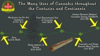 the many uses of cannabis throughout the centuries and continents