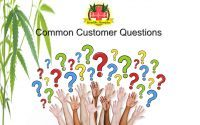 Common Customer Questions About Healthy Hempies Products, Healthy Hempies Topical Salve, Healthy Hempies Tincture Alternative, CBD oil common customer questions