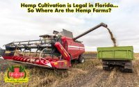 Hemp Cultivation is Legal in Florida... So Where Are the Hemp Farms? Cultivation, Industrial Hemp, Hemp Farms, Florida's Hemp Program Hemp Cultivation is Legal in Florida... So Where Are the Hemp Farms